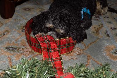 wreaths-lil-helper